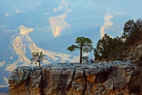 Landscape photography of trees silhouetted against the Grand Canyon in Arizona.