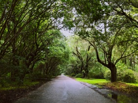 Landscape photography of a southern tree-lined road at Magnolia Plantation and Gardens in South Carolina.