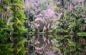 Landscape photography of trees reflecting in a still pond at Magnolia Plantation and Gardens in South Carolina.