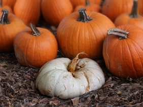 Natural still life fall pumpkin photography.