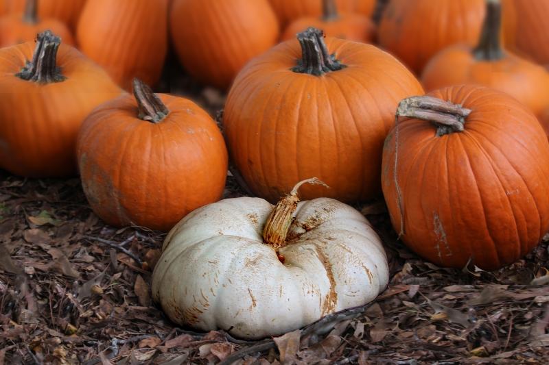 Natural still life fall pumpkin photography.