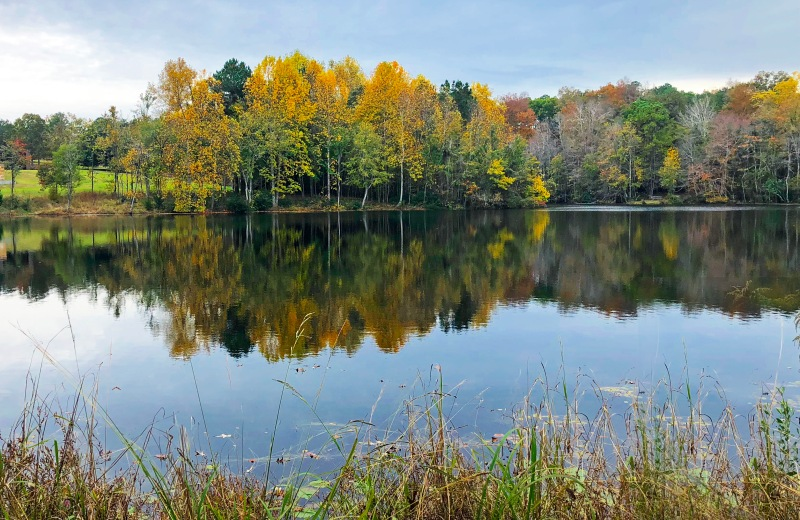 Landscape photography of fall trees reflecting in a still pond in Columbia, South Carolina.