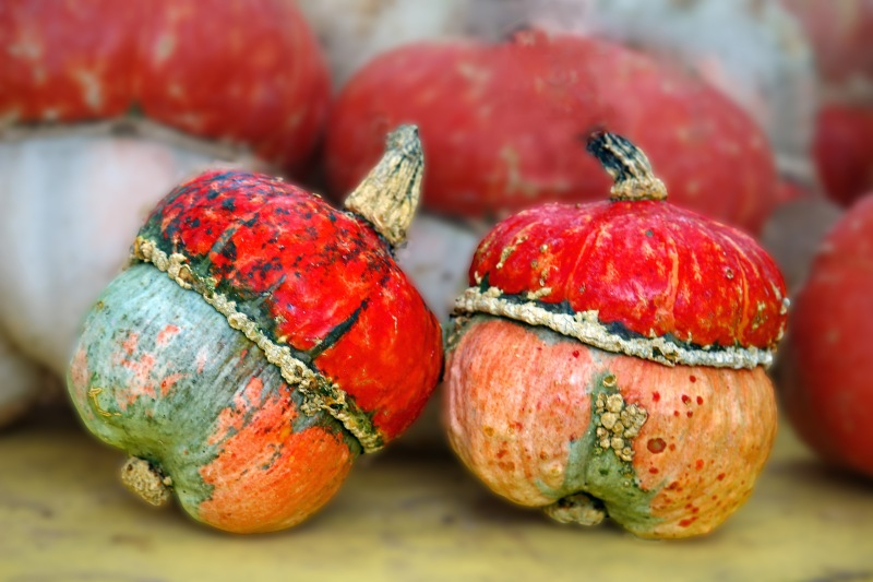 Natural still life photography of two colorful autumn gourds.