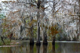 Landscape photography of a lake with cypress trees and Spanish moss in Brookgreen Gardens, South Carolina.
