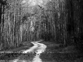 Black and white landscape photography of a path into the woods.