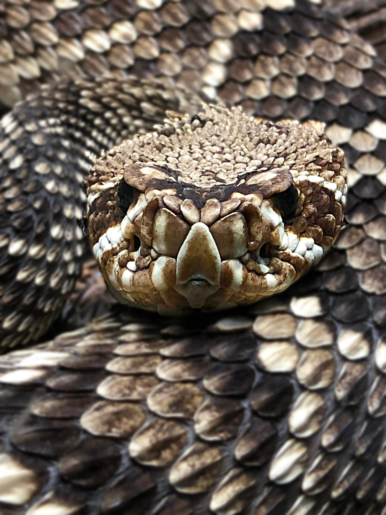 Wildlife photography of a close up head of a snake.