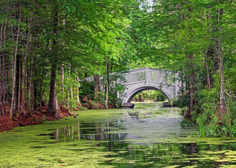 Southern landscape photography of a swamp, bridge, and cypress trees from Cypress Gardens, South Carolina.