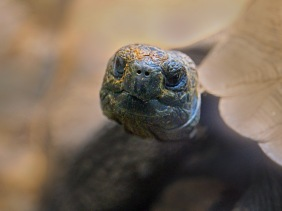 Close up wildlife photography of a head of a turtle.