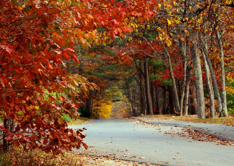 Autumn landscape photography of a pathway through the woods in Northamption, Mass.