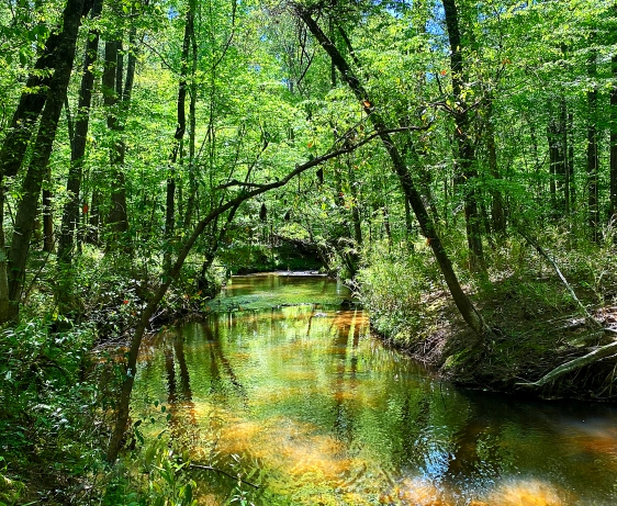 Landscape photography of a creek in the woods in Blythewood, SC.