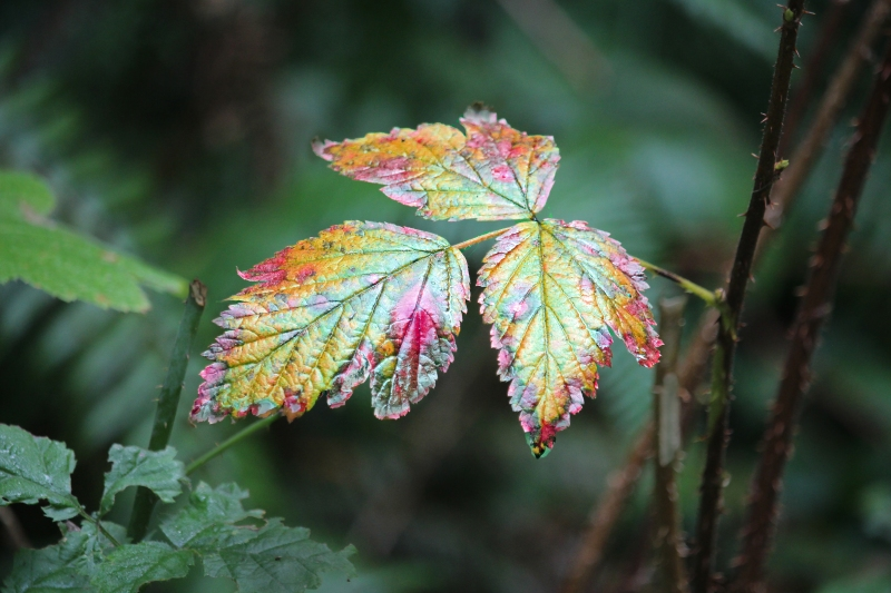 Close up nature photography of fall colorful leaves.
