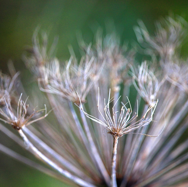 Macro nature photography from Devil's Churn, Oregon.