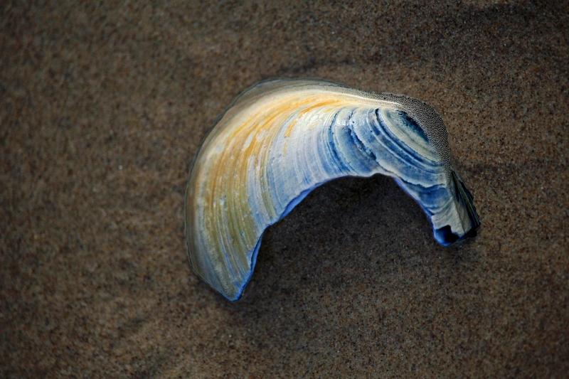 Macro photography of a broken clam shell in the sand.