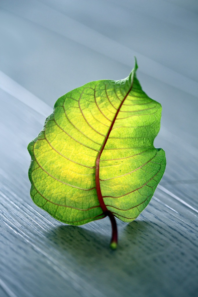 Macro nature photography of a green and yellow leaf.