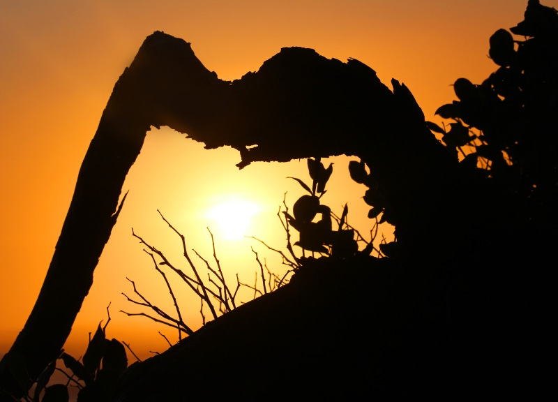 Sunset photography framed within a natural silhouette.