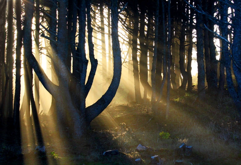 Landscape photography of sun rays streaming through the trees in the woods of Seal Rock Beach, Oregon.