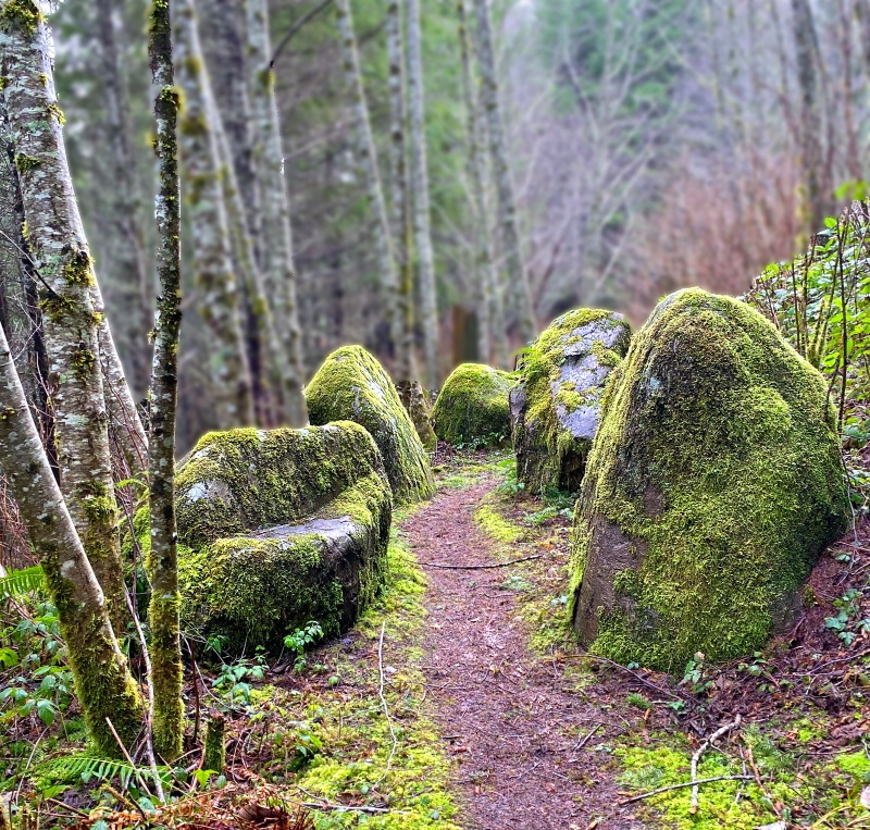 Landscape photography of the old growth forest along the Harris Trail on the central coast of Oregon.
