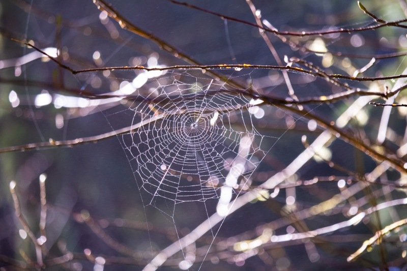 Close up nature photography of a spider web.