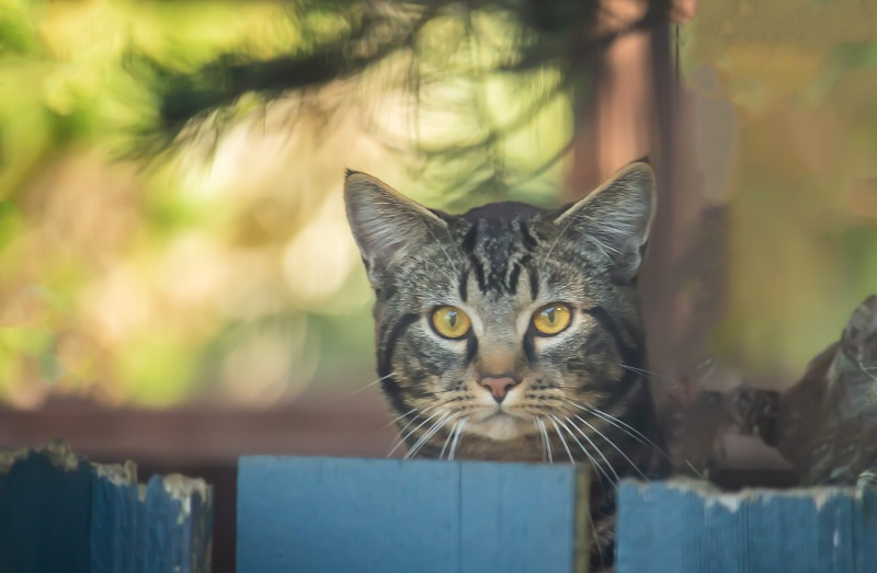 Animal photography of a cat peeking over a fence.
