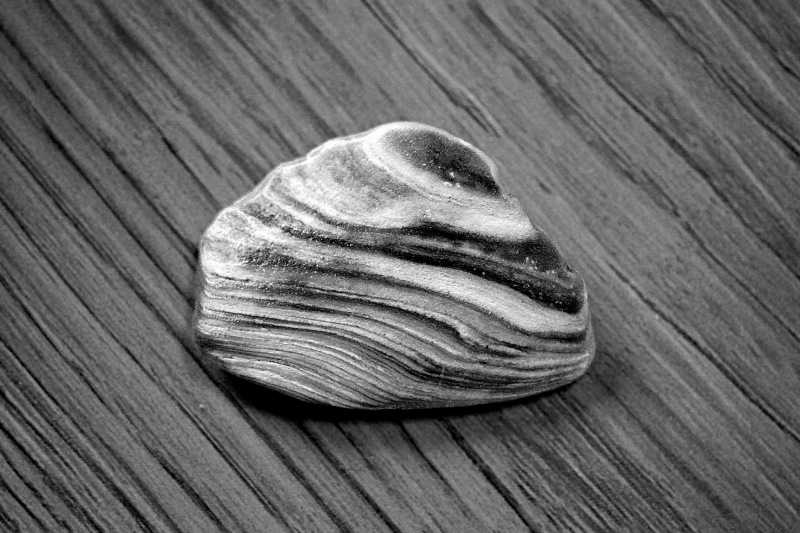 Black and white close up photography of a striped shell fragment on a striped surface.